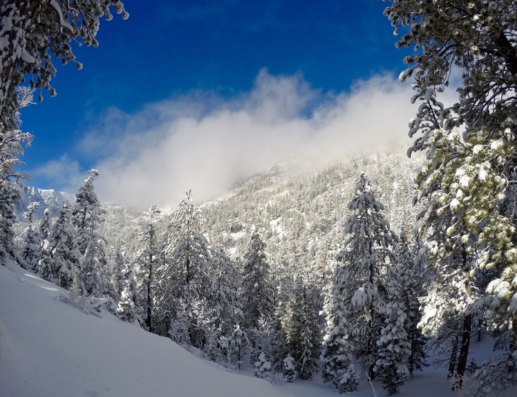 Looking up to Mt Chareston from Trail Canyon, Mount Charleston