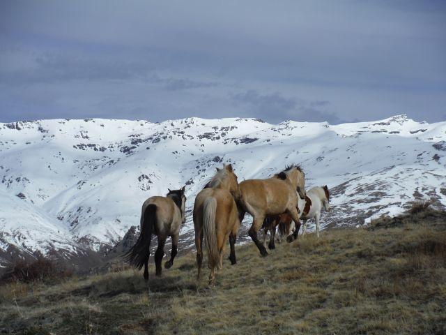 horses in the sierra nevada, Mulhacen