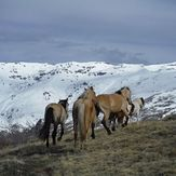 horses in the sierra nevada, Mulhacen