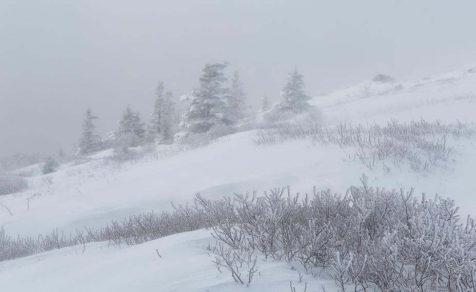 Winter White at Roan Mountain, Roan High Knob