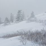 Winter White at Roan Mountain, Roan High Knob