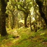 Mosst track, Mount Hector