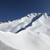 Delicious, Mount Shasta