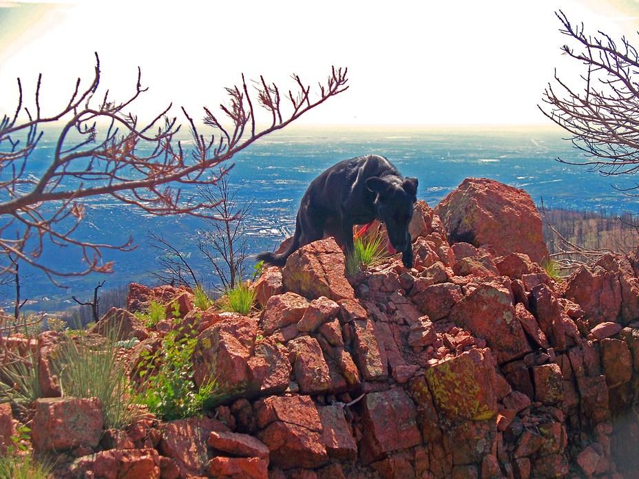 Top of Petkash Peak