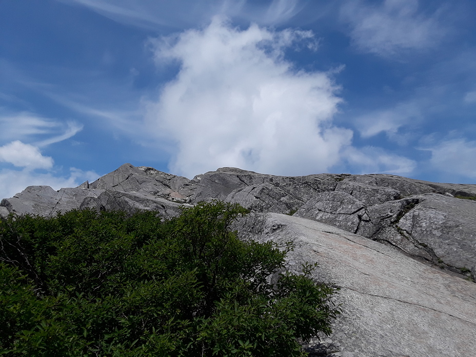 view of Mt Monadnock summit from white cross trail, Mount Monadnock