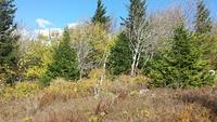 North of the big rocks, Spruce Knob photo