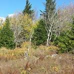 North of the big rocks, Spruce Knob