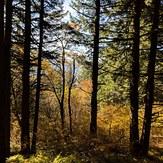 Fall Colors, Dog Mountain