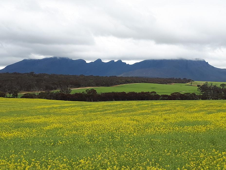 Stirling Range, Bluff Knoll