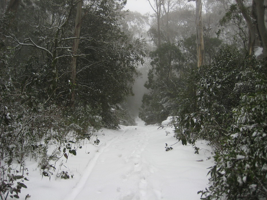 Link Trail, Barrington Tops