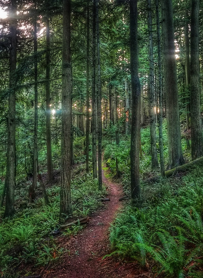 Old Grizzly trail, Squak Mountain