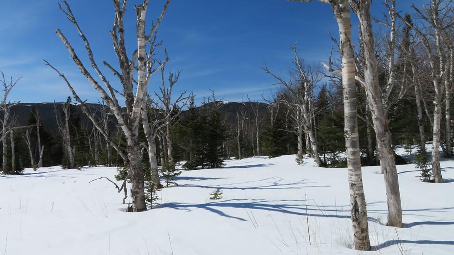 Mount Isolation weather