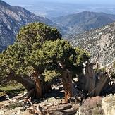 Backbone 05-16-2020, Mount Baldy (San Gabriel Range)