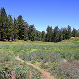 MTN. PINOS MEADOWS AT 8300 FT., Mount Pinos