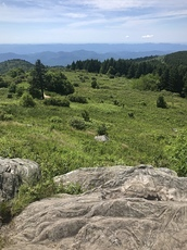 Black Balsam Knob photo