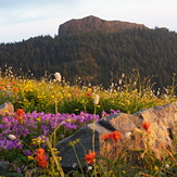 Silver Star Mountain (Skamania County, Washington)