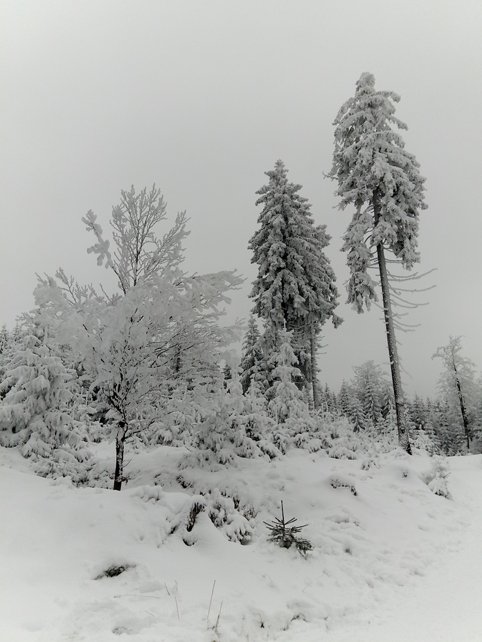 Szlak na Kozie siodlo., Wielka Sowa
