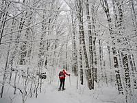 Winter Wonderland on trail to Mt. VanHoevenbery, Adirondacks, NY, Mount Van Hoevenberg photo