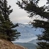 Columbia River through the trees, Dog Mountain