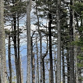 Springtime on Mt. Mitchell, Mount Mitchell (North Carolina)
