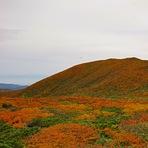 The best autumn leaves in Japan, Kurikoma
