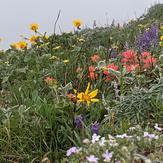 Beautiful spring flowers, Dog Mountain