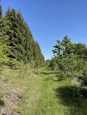 Beautiful forest, Babička Gora photo