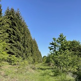 Beautiful forest, Babička Gora