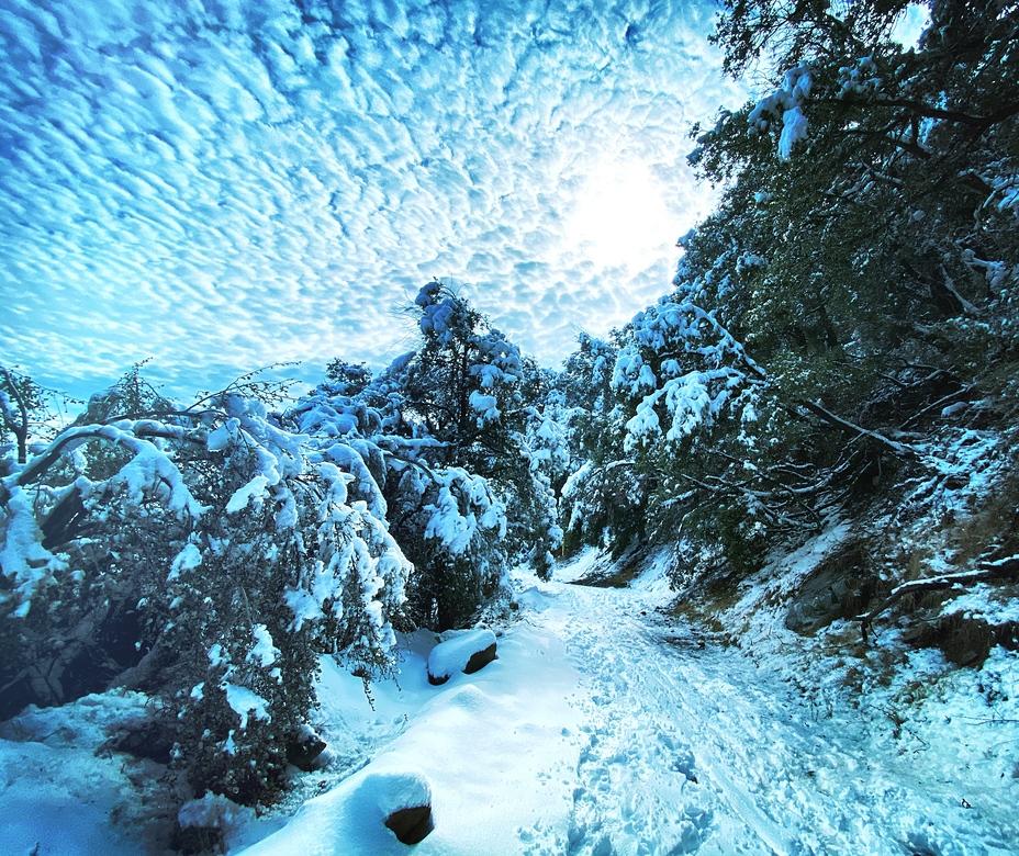 Winter in Wonderland, Mount Wilson (California)