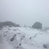 Durwil (Mt William) summit in a snowstorm #1, Mount William