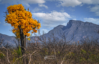 Out if the fire, Bluff Knoll photo