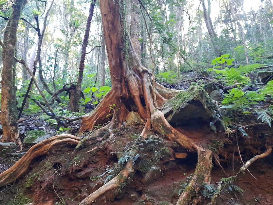 Hidden Treasure walking trail Copeland, Barrington Tops