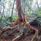 Hidden Treasure walking trail Copeland