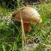 "A Mushroom says ""Hello"", Brandon Hill"