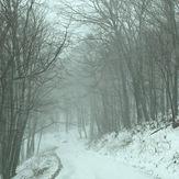 Snowy Drive, Spruce Knob