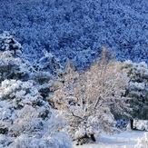 TSAPOURNIA forest, Erymanthos