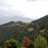 Erymanthos forest