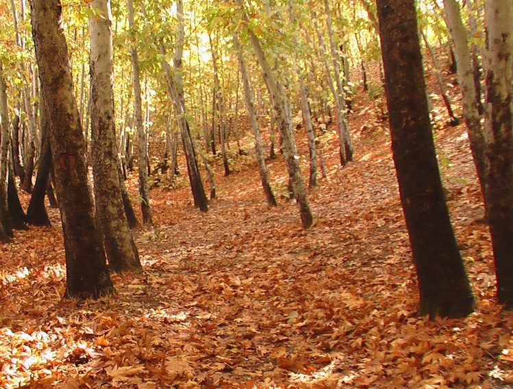 Ghalat forest in autumn