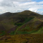 Scald Law