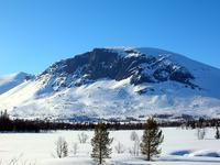 Skogshorn photo