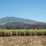 Volcan Ceboruco