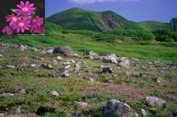 Mount Midori photo