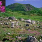 Mount Midori