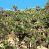 Mount Cabrebald