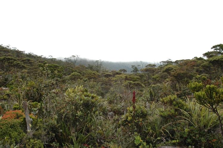 Mount Murud Sarawak weather