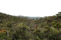 Mount Murud Sarawak photo