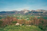 Aratz photo