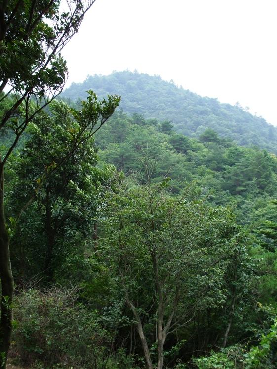 Mount Matsuo