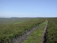 Gisborough Moor photo