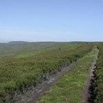 Gisborough Moor